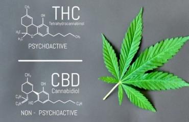 CBD e THC, le differenze.